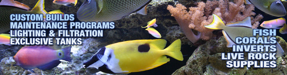 Custom builds, Maintenance, Lighting Filtration, Exclusive Tanks, Fish, Corals, Live Rock